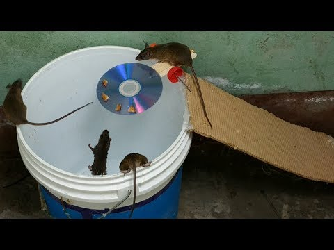 Bucket Mouse Trap The best mouse trap I ve ever seen