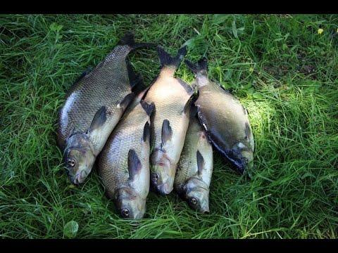 ловля на река днепр