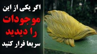 اگر یکی از این موجودات را دیدید سریعا فرار کرده و کمک خبر کنید - کابل پلس | Kabul Plus