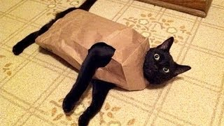 You DON'T WANT TO MISS THIS, TRUST ME! - TRY NOT TO LAUGH at FUNNY ANIMALS