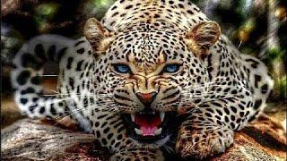 وثائقى | الفهد الصياد وحش فائق السرعة -عالم الحيوانات المفترسة