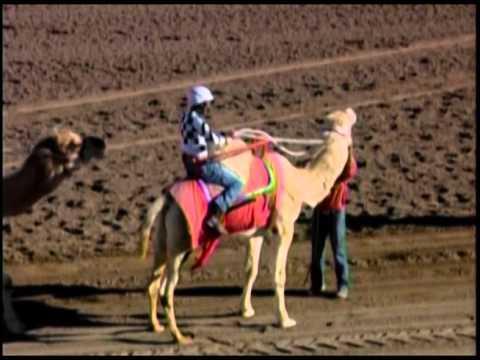 Camel Ostrich Zebra Racing at Turf Paradise 2016