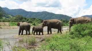Elephant Mother Trumpets to Call Her Baby