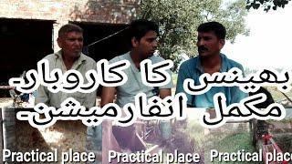 Buffalo farming in pakistn  ( practical )