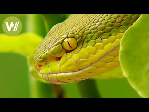 The most poisonous and dangerous animals in the world animal documentary in HD