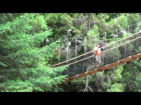 Redwoods Treewalk Rotorua New Zealand