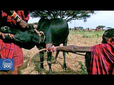 Xxx Mp4 Way Of Life Of Maasai Tribe 3gp Sex
