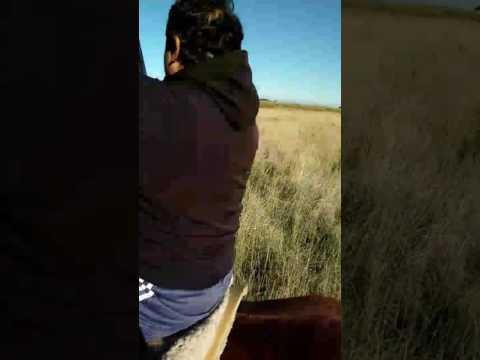 Caza de jabalí a caballo 😋