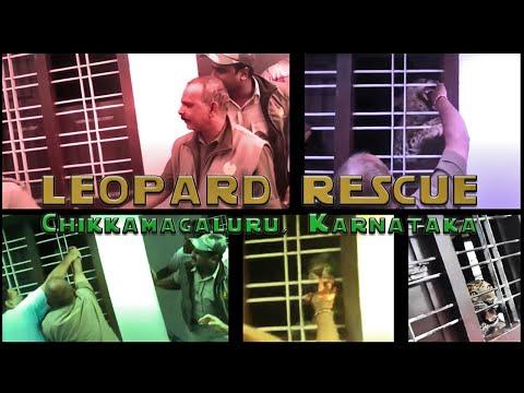 Xxx Mp4 Leopard Attack In India Karnataka 3gp Sex