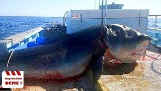 Balık Tutarken Yakalanan En Korkunç 10 Yaratık!