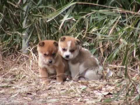 【動物】【大量捨て犬事件】犯人はペットのブリーダーや販売業者 【小型犬 遺棄】
