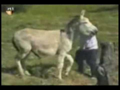 Xxx Mp4 Man VS A Donkey 3gp Sex