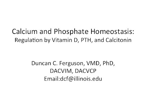 Xxx Mp4 Calcium Physiology Regulation By Vitamin D PTH And Calcitonin 3gp Sex