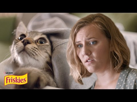 Life With A Cat Presented By BuzzFeed & Friskies