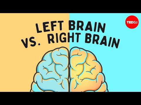 Xxx Mp4 The Left Brain Vs Right Brain Myth Elizabeth Waters 3gp Sex