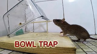 bowl mouse trap