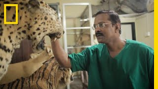 This Self-Taught Taxidermist May Be the Last One in India   National Geographic