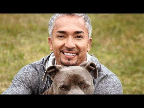 Xxx Mp4 The Untold Truth Of The Dog Whisperer 3gp Sex