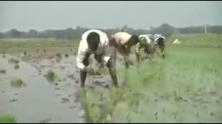 Bangla gan Dokhe goya jivon amar