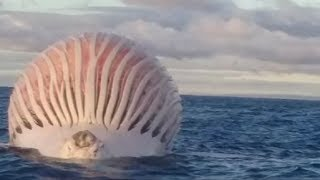 Los Vídeos más Raros del Mundo 9 / Videos Increibles