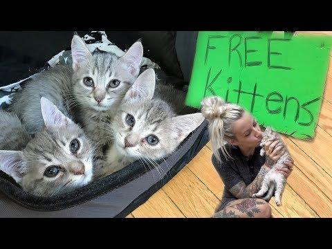 Xxx Mp4 Free Kittens 3gp Sex