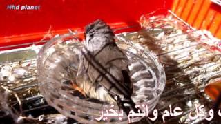 عيد فطر سعيد و كل عام و انتم بخير...
