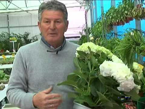 El jardinero en casa Hortensias