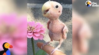 Naked Bird Who Lost Her Feathers Is So Loved Now | The Dodo