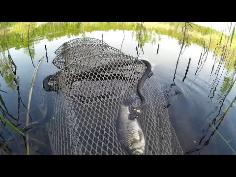 рыбалка ловушками видео