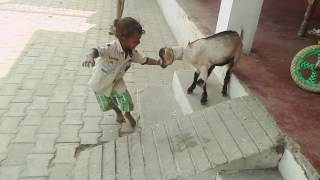 Comedy child goat....