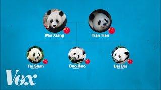 China's panda diplomacy, explained