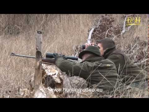 Wild Boar Red Deer Mouflon Hunting In Hungary Bükkszenterzsébet HD .mpg