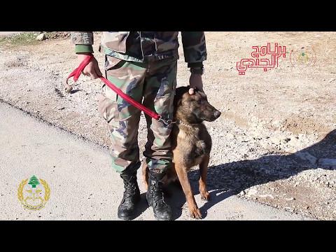 دور الكلاب المدربة في الجيش