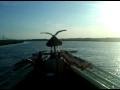 Stupid Sea Gull Video.3GP