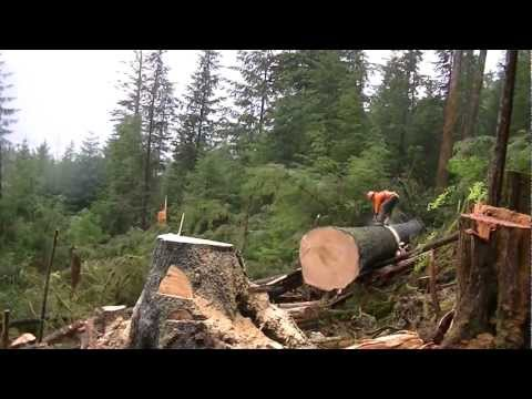 Michael Hawkins The Cutter Travels North To Alaska In Search Of Big Wood
