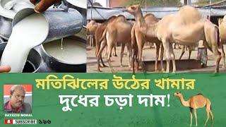 Camel farm in Bangladesh, ঢাকার মতিঝিলের উটের খামারের এ কি অবস্থা ! দুধ বিক্রি হয় চড়া দামে
