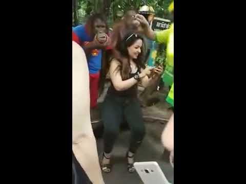Xxx Mp4 यह Sexy महिला बंदरों से करवाने लगी ये हरकत 3gp Sex
