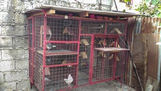 Simple pigeon loft design, All in one.