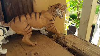 A Big Cat
