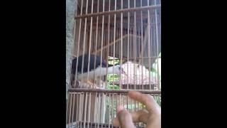 Burung truwok