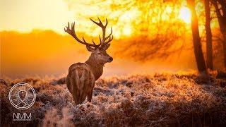 Relaxing Celtic Music: Instrumental Flute Music, Sleep Music, Relaxing Music, Meditation Music 04C
