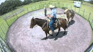 Ponying Rambo for the first time using our horse BUCK.