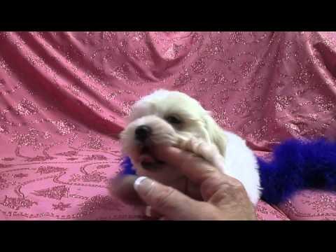Xxx Mp4 Prisicilla Female Maltese Video 7 31 2014 3gp Sex