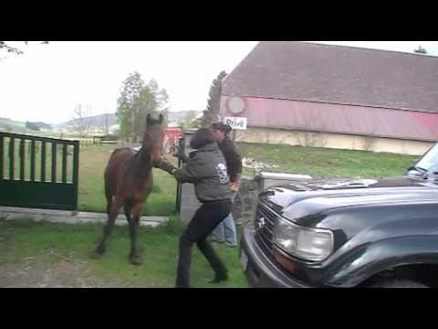 Sauvetage 3 chevaux à Neuchâtel CH