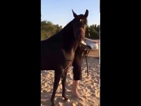 Xxx Mp4 فتاة مع حصان VID 20160503 WA0000 3gp Sex