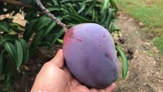 Visit to the fruit Orchard 01/02/2018