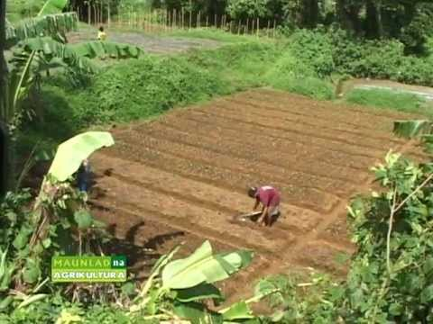 Costales Nature Farms featured in Maunlad na Agrikultura.mpg
