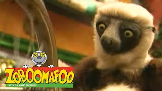 Zoboomafoo 116 - Itchy (Full Episode)
