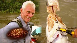 The Payara Eating Another Payara - River Monsters