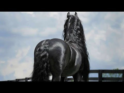 This Amazing Horse Looks Like Typical Horse Until He Turns His Head